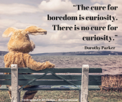 """""""The cure for boredom is curiosity. There is no cure for curiosity."""" -Dorothy Parker"""